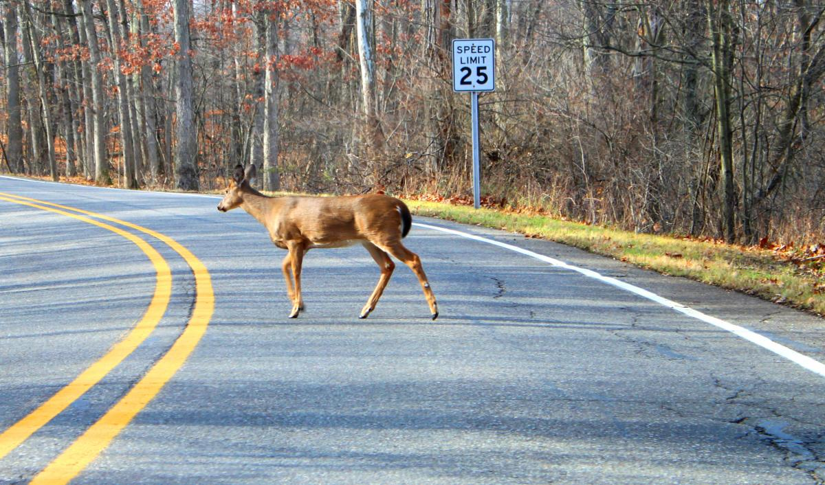 Oregon: Roadkill can be harvested for food